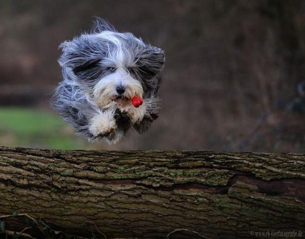 狗狗搞笑圖片大收集 - 文章圖片