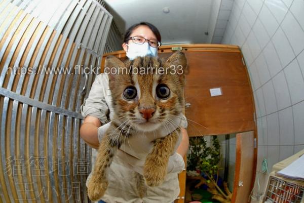 超可爱小石虎,可不是大花猫哦?一级保育类动物不可私养?