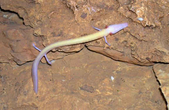 外國男子在山洞找到「中國龍的幼崽」以為是大發現,沒想到原來竟然是另一種生物!