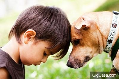 狗狗被主人丟棄3次!最後一次,它發瘋般的舉動,讓所有人心碎了